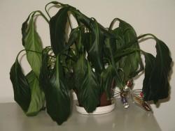 folhas desidratadas