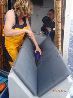 marcacao atum1