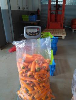 processamento cenoura 3