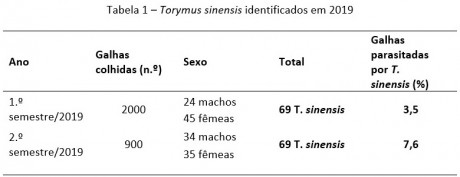 tabela1 torymus sinensis 2019