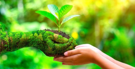 ano internacional sanidade vegetal 1