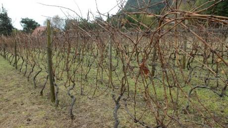 seguro viticola na Madeira