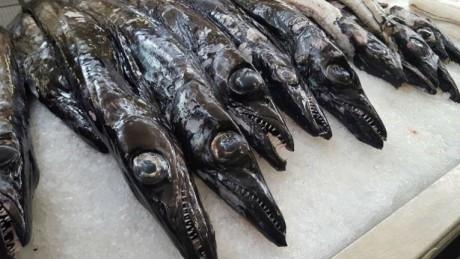 peixe espada preto 1