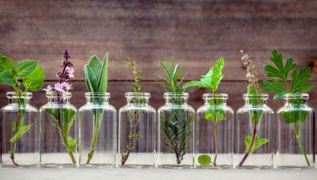 ervas aromaticas DICAs 1