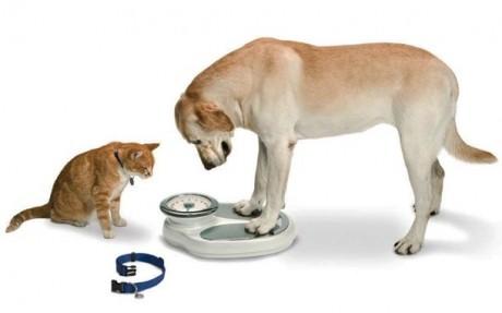 obesidade animais de companhia1