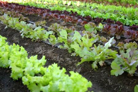 horta biologica1