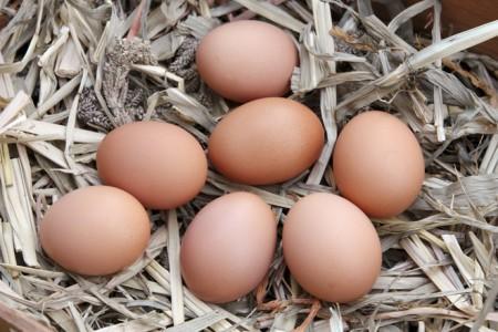 ovos biologicos