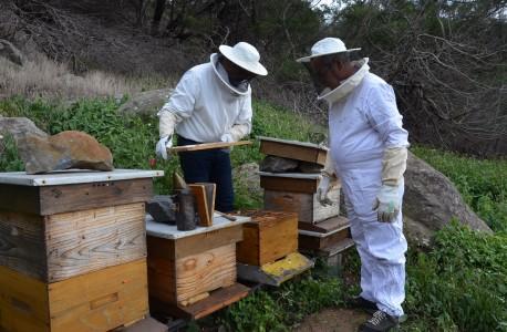 a arte da apicultura DICA 1