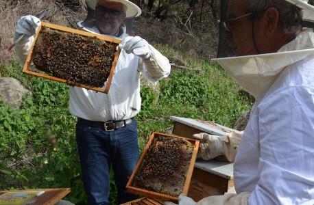 a arte da apicultura DICA 2