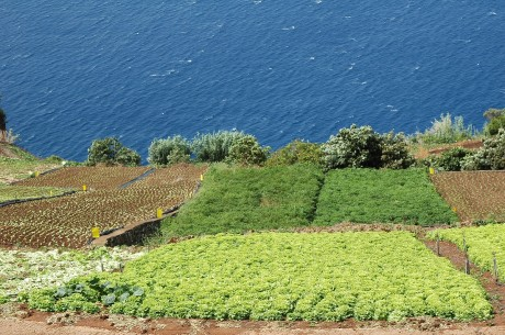 paisagem agricultura