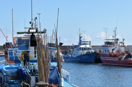 4 Feira do Mar e do Pescador celebrando a atividade pesqueira 1