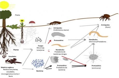 figura2 exemplificacao da cadeia alimentar do solo