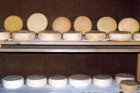 aleitamento artificial ovinos 3 queijo curado