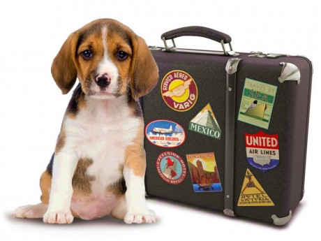viajar animais companhia2