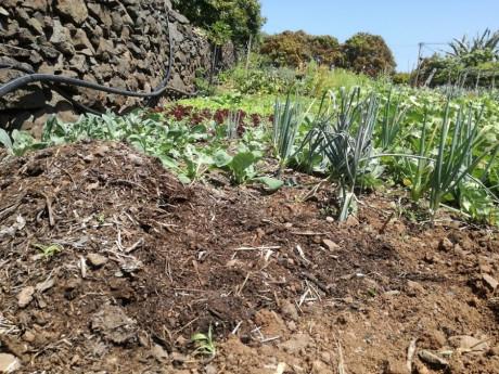 figura1 aplicacao de composto em solos ocupados por culturas horticolas