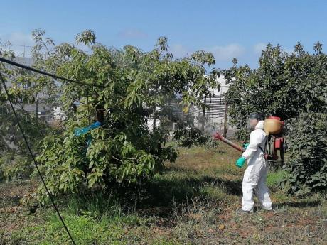 fruttmac atividades a decorrer figura2 campo experimental cultura abacateiro