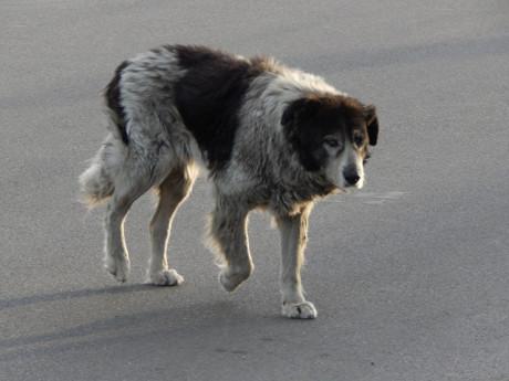 animal de companhia animal errante medico veterinario DICAs 1