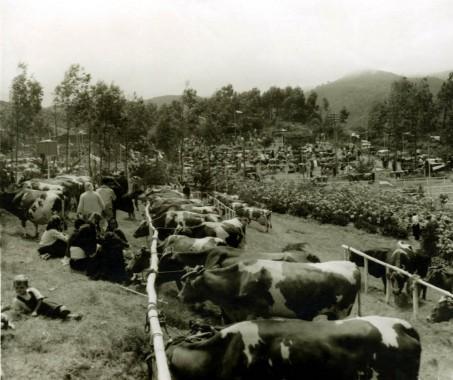 feira gado1962