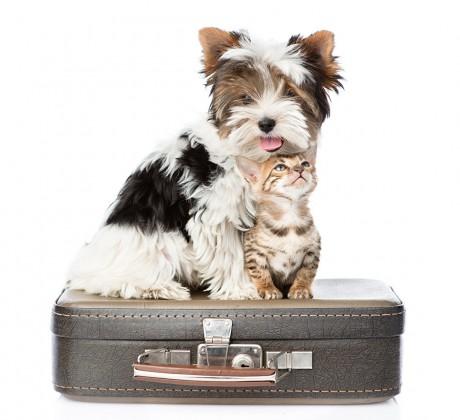 viajar animais companhia1