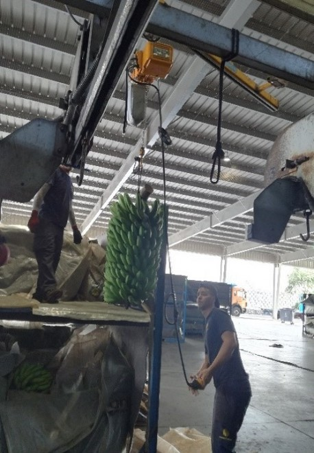 fig3a visita tecnica tenerife processamento cachos banana