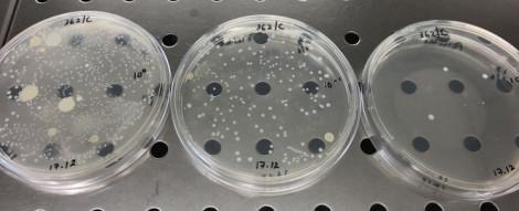 qualidade do leite figura5 contagem em placa do teor total de microrganismos