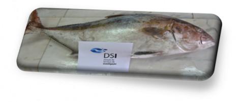 aprovacao projetos DSI peixe