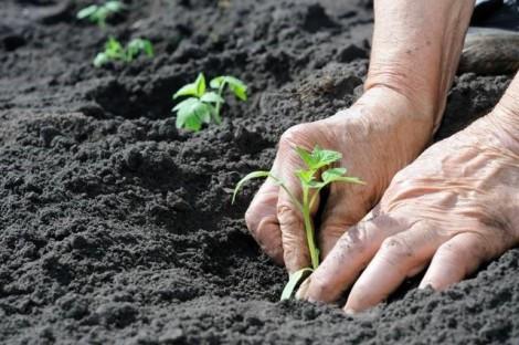 plantacao solo