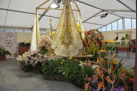 expo flor 3525