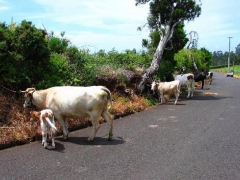 concentracoes de gado1