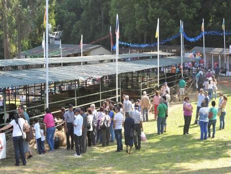 expo gado